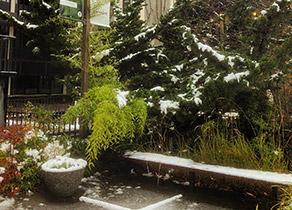 North Weter Courtyard