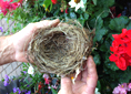 A bird's nest on the SPU campus