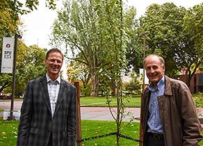 New Poplar Tree
