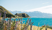 Image from New Zealand showing a beach and mountains with flowers