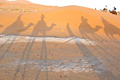 Silhouettes of camels on the sand
