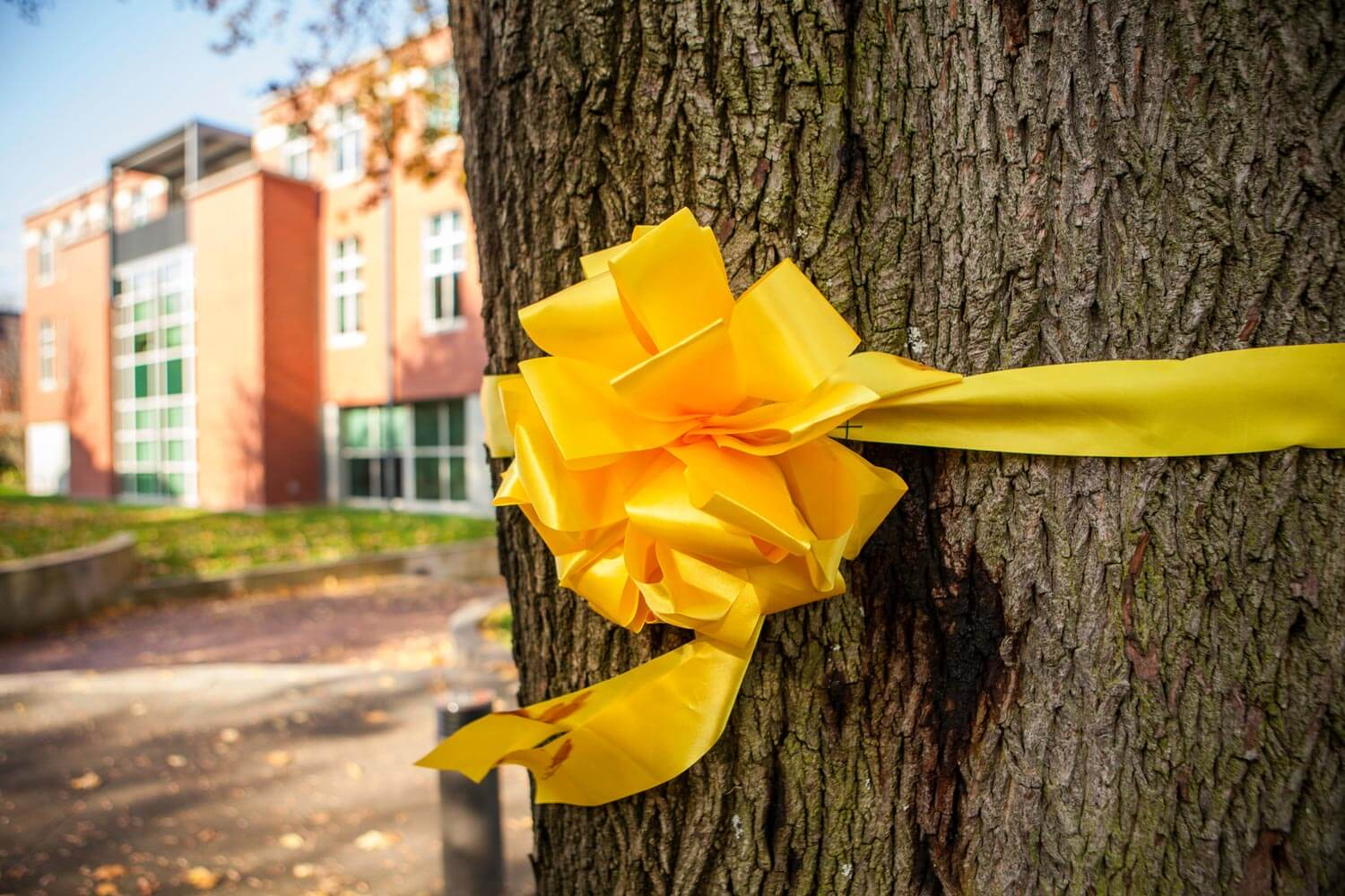 Yellow ribbon on tree